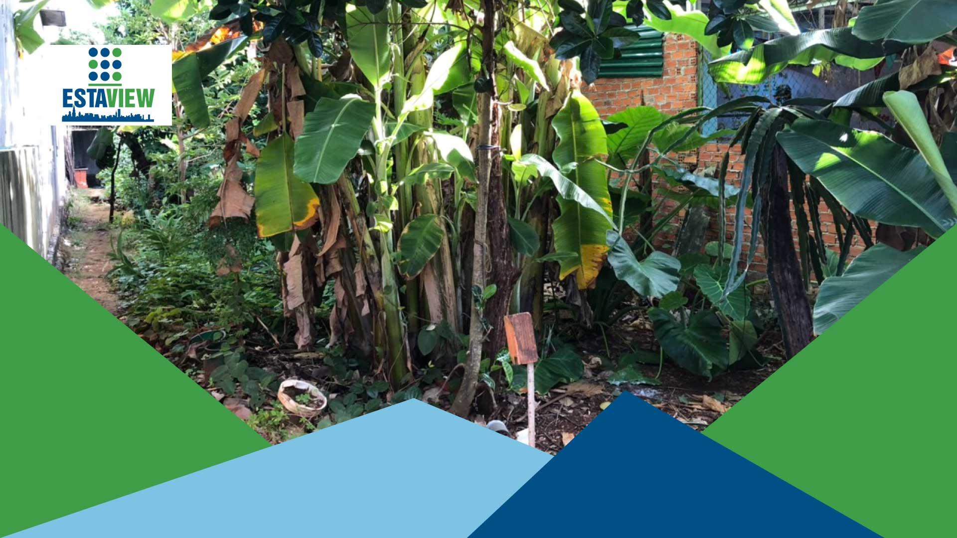 Mua Bán Nhà Đất Buôn Ma Thuột: Đất Nền Nguyễn Chí Thanh Đối diện dự án Ecocity Premia Phường Tân An
